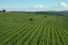 Fazenda da Ligoa