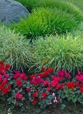 Good gardening tips! Lists of low maintenance plants that are easy to grow in any garden! | buzzle