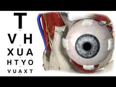 How To Improve Eyesight Naturally Fast 20/20 with Exercises at Home - YouTube