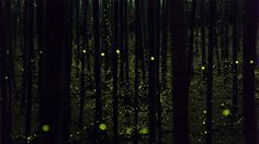 Long-exposure photographs of fireflies create magical forest scenes by Yume Cyan.  Posted by Lauren Davis at io9.com
