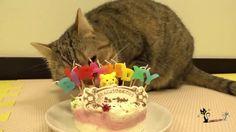День рождения кота / the cat birthday