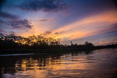 Rainforest Sunset Sukau Kinabatangan River Borneo #jungle #proboscismonkey #kinabatanganriver #borneo #adventure #travel #sunset #night #sunrise