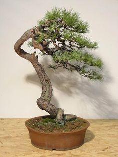 Bonsai, Friends, Nature - the happy sweet life
