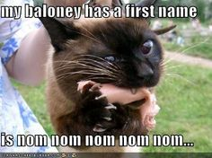 silly cat, baloney isnt for you.