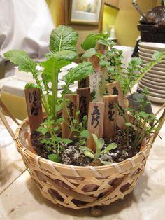 "Food as Medicine: the Japanese Seven Herbs of ""Spring"" - Seri (water dropwort), Nazuna (shepherd's purse) Gogyo (aka hahakogusa: cudweed) Hakobera (chickweed), Hotoke no Za (nipplewort), Suzuna (aka kabu: turnip), Suzushiro (aka daikon: white radish)|春の七草"