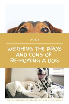 If your dog has been with you for a long time, you might actually want to wait until you have considered all other possible options before you decide to take the re-homing option. Dogs Up For Adoption, Pet Dogs, Pets, Dogs For Sale, Dog Pin, Adopting A Child, Pictures Of You, Your Pet, Told You So