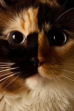 Close Up Topaz, via Flickr.
