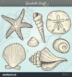Vector Illustration Of Various Sea Shells Doodled In A Vintage Style. Includes Conch Shell, Spiral, Clam, Sand Dollar, Sea Star, And Others. Tropical Beach Clip-Art. Eps10 - 102604526 : Shutterstock