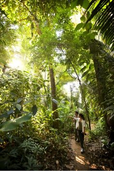Belize Rainforest - Top picks would be exploring the Mayan Ruins of Altun Ha or Xunantunich, cave tubing, zip lining, and hiking to a few waterfalls. The wildlife is pretty spectacular with hundreds of different bird species, jaguars, and other big cats.