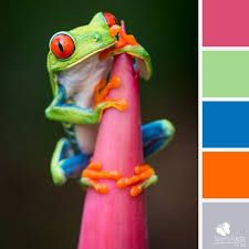 Image result for frog colour combo