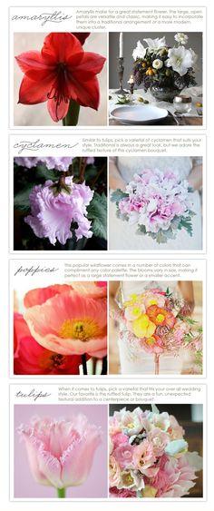 Flower types in season - February. Amaryllis, cyclamen, poppies, tulips