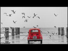500 versus seagulls :-)