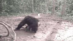 monkey animated GIF