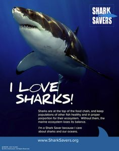HELP: Should We Create A Save The Sharks Bracelet?!!! | The Official Pura Vida Bracelets Blog