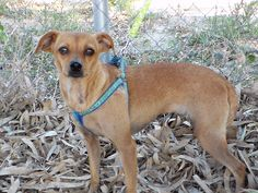 Nilla, female, born 2011, 30cm tall and 6 kilos. A bit shy but loves to be cuddled. Needing a home to feel safe loved and to florish - Contact: adoptions@iara-alliance.org Nilla, Small Dogs, Cuddling, Adoption, Female, Animals, Animais, Animales, Animaux