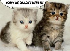 Say 'sorry' with this adorable cat eCard. - more free ecards at MyFunCards.com