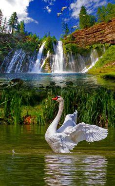 1 million+ Stunning Free Images to Use Anywhere Beautiful Swan, Beautiful Birds, Beautiful World, Beautiful Images, Animals Beautiful, Beautiful Nature Wallpaper, Beautiful Landscapes, Beautiful Waterfalls, Pretty Birds