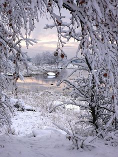I Love Snow, I Love Winter, Winter Time, Winter Magic, First Snow, Winter Scenery, Snow Scenes, Foto Art, Winter Beauty