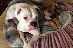 Daisy with her Duke!