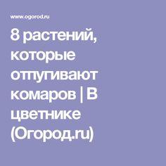 8 растений, которые отпугивают комаров | В цветнике (Огород.ru)