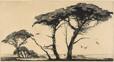 Mildred Bryant Brooks(American, 1901-1995)  The Pines of Monterey    1935  etching on paper