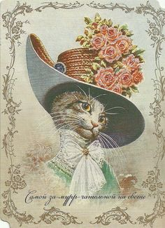 Cat with hat.   Nice border