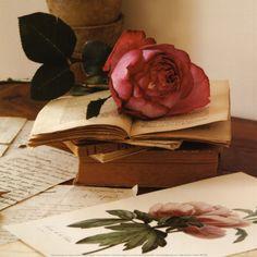 books old flower rose