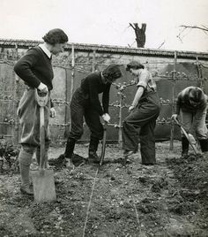 Land Girls digging for victory. Dig For Victory, Women's Land Army, Land Girls, Victory Garden, Potting Sheds, Garden Pictures, Working Woman, The Great Outdoors, Victorious