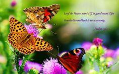 Loof de HEERE, want Hij is goed, want Zijn goedertierenheid is voor eeuwig.  Psalmen 136:1