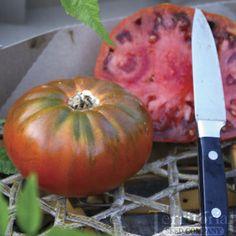 Cosmonaut Volkov Tomato - early heirloom. Wins taste tests.