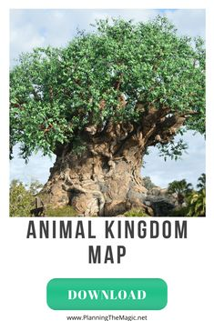 Disney World - Animal Kingdom Map Disney Planner, Disney Vacation Planning, Disney World Planning, Disney World Parks, Disney World Vacation, Disney Vacations, Disney Travel, Disney World Tips And Tricks, Disney Tips