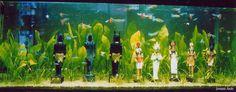 エジプトのオアシス・ジョヴァイエ水槽~カージナルテトラとグッピーが泳ぐ