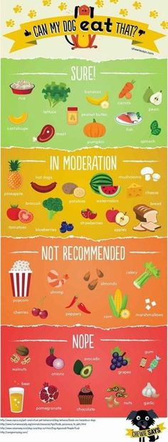 Can my dog eat that?  A guide to what foods are safe for dogs to eat!  Things such as rice, peanut butter, banana, pumpkin, spinach, carrot & fish are all great. Tree nuts, avocado, onions, garlic, beer, chocolate & grapes are very bad, however. Good thin