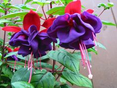 1000 Images About Shade Flowers On Pinterest Shades