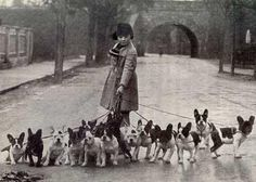 I would like a picture of me and a bunch of frenchies!! How cute!
