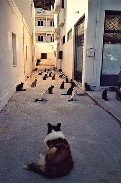 Why didn't I go to this place in Greece! Cats in Syros, Cyclades, Greece Amor Animal, Mundo Animal, Funny Cats, Funny Animals, Cute Animals, Baby Cats, Cats And Kittens, Herding Cats, Gatos Cats