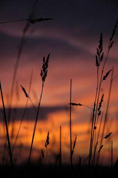Blackadder sunset 10 by Dave-Mann, via Flickr