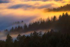 Tree Top Dreams