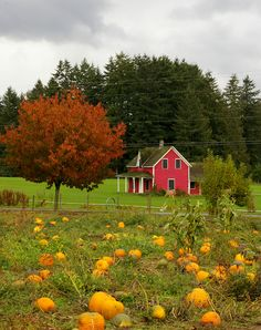 Old Farmhouse - Looks so peaceful and quiet