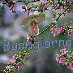 You brings my lost smile Free online Thinking Of You Is Always Funny ecards on Everyday Cards Morning Hugs, Morning Wish, Good Morning Images, Good Morning Quotes, Healing Wish, Italian Memes, Get Well Cards, May Flowers, April Showers