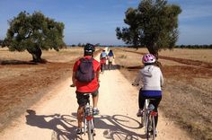 Puglia Bike Tour: Cycling Through the History of Extra Virgin Olive Oil Starting out from Albergabici in Montalbano, at the foot of thehills between Ostuni and Fasano, in the heart of Puglia, we cycle on a section ofthe Traiana roadand go down hill towards the coast to discover thecoastal dune park, a smalltreasure of biodiversitymade of plants, trees, reptiles and birds typical of thewet lands.Tour continues slowly on small road...