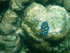 La belleza submarina de Koh Tao Koh Tao, Fish, Pets, Animals, World, Thailand Travel, Underwater, Beauty, Animales