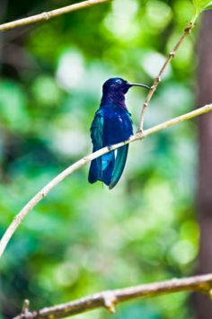 View top-quality stock photos of Saint Lucia. Find premium, high-resolution stock photography at Getty Images. Saint Lucia, Bird Species, Hummingbird, Birds, Stock Photos, Adventure, Purple, Awesome, Photography