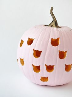 super cute cat pumpk