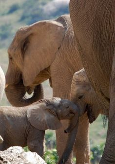 Elephant family by Colleens Creations