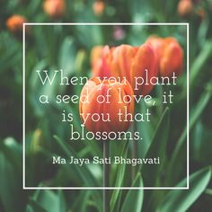 Plant the ~ Healthiest of seeds!  Lightbeingmessages.com