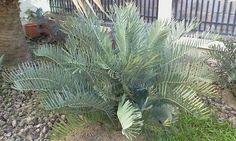 E.cupidus Plants, Plant, Planets