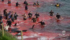 Nous avons été arrêtés pour avoir tenté d'empêcher le massacre de centaines de baleines.
