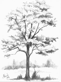 Tree drawing pencil 56 new Ideas Nature Drawing, Plant Drawing, Painting & Drawing, Drawing Trees, Landscape Sketch, Landscape Drawings, Landscape Paintings, Plant Sketches, Tree Sketches