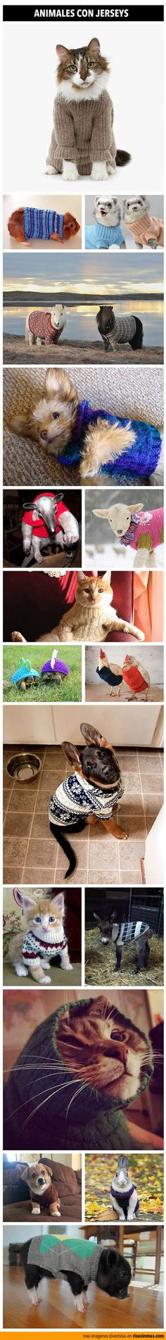 Animales con jerseys